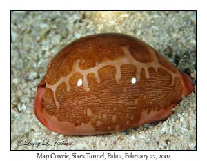 Map Cowrie