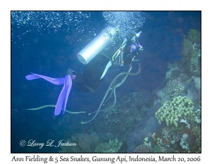 Ann Fielding & 5 Sea Snakes