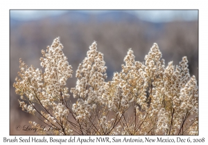 Brush Seed Heads