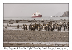 King Penguins & Polar Star