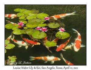 Louise Water Lily & Koi