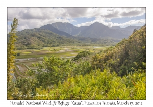 Hanalei National Wildlife Reserve
