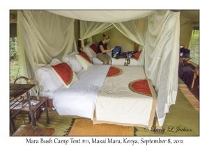 Mara Bush Camp Tent #11