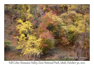 Fall Color, Sinawava Valley