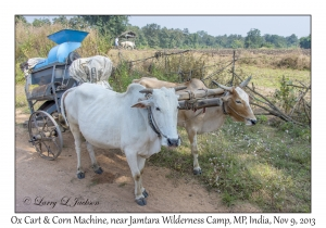 Ox Cart & Corn Machine