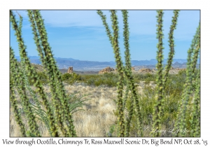 View through Ocotillo