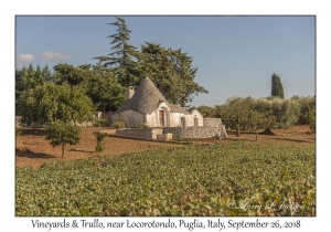 Vineyard & Trullo