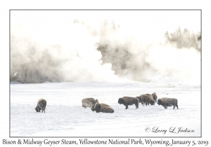 Bison & Midway Geyser Steam