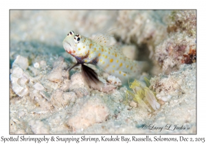 Spotted Shrimpgoby & Snapping Shrimp
